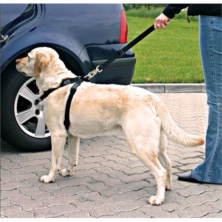 Dog Car Seat Belt and Harness   Large Dogs (70 90cm)