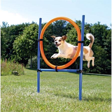 Dog Training and Activity Agility Set   Fully Adjustable